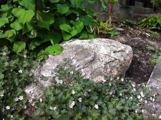 north side plantings & native boulder