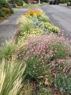 Water-wise Planting Strip, year 1