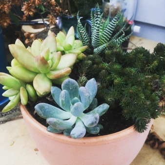 succulent bowl $45 and up